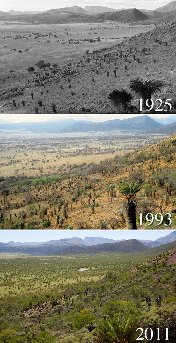 south_african_savanna_1925_1993_2011