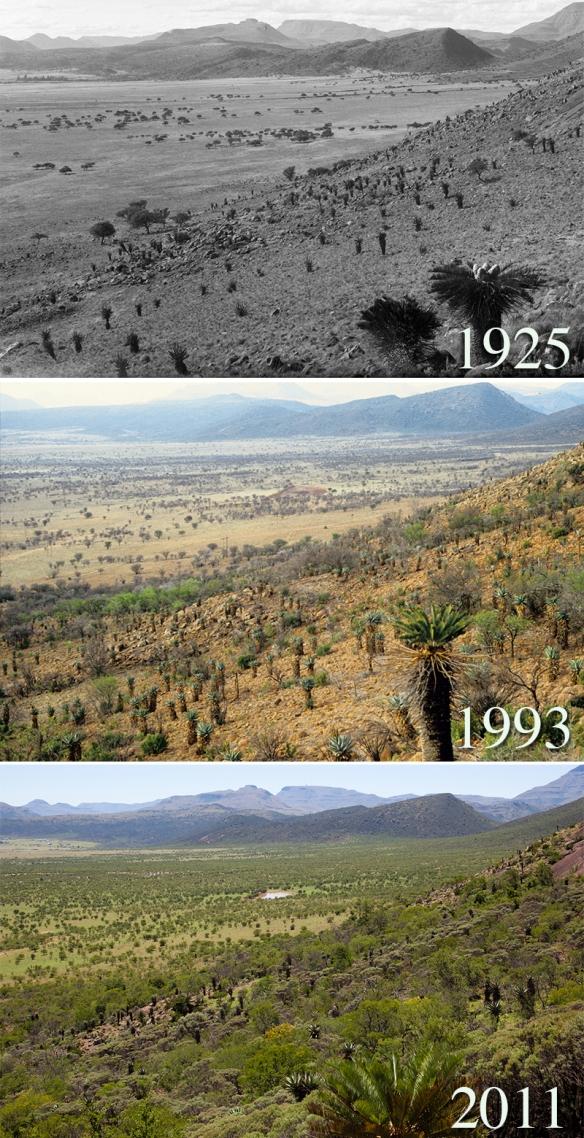 south_african_savanna_1925_1993_2011
